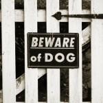 bigstockphoto_beware_of_dog_sign_240206